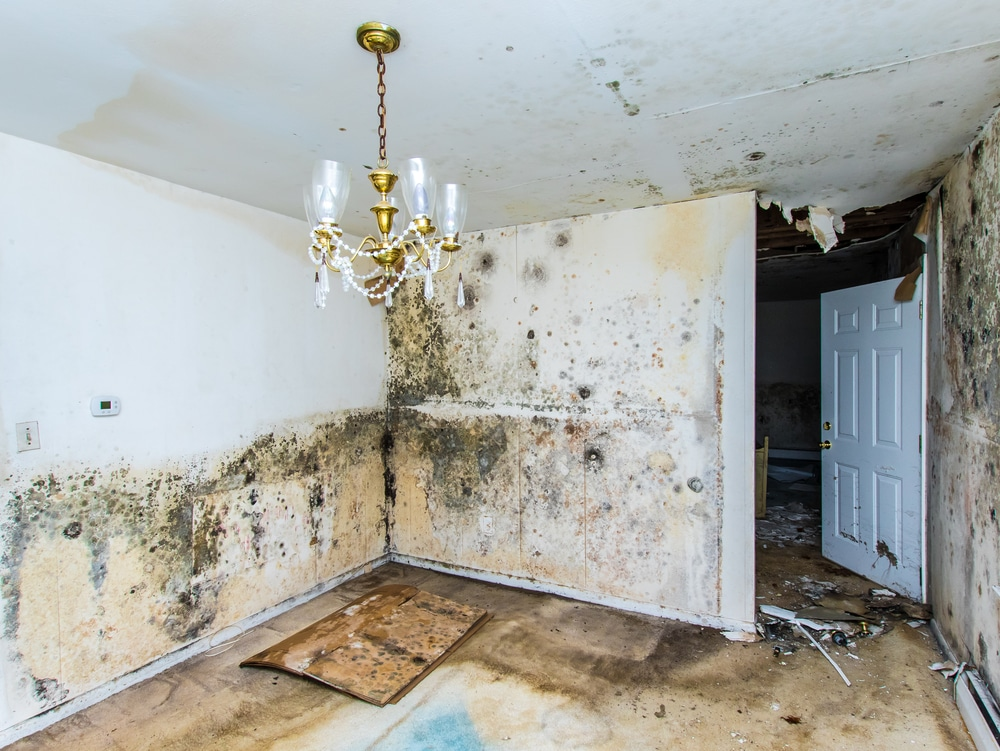 Housing Disrepair Expert Witness Section 11 Condensation