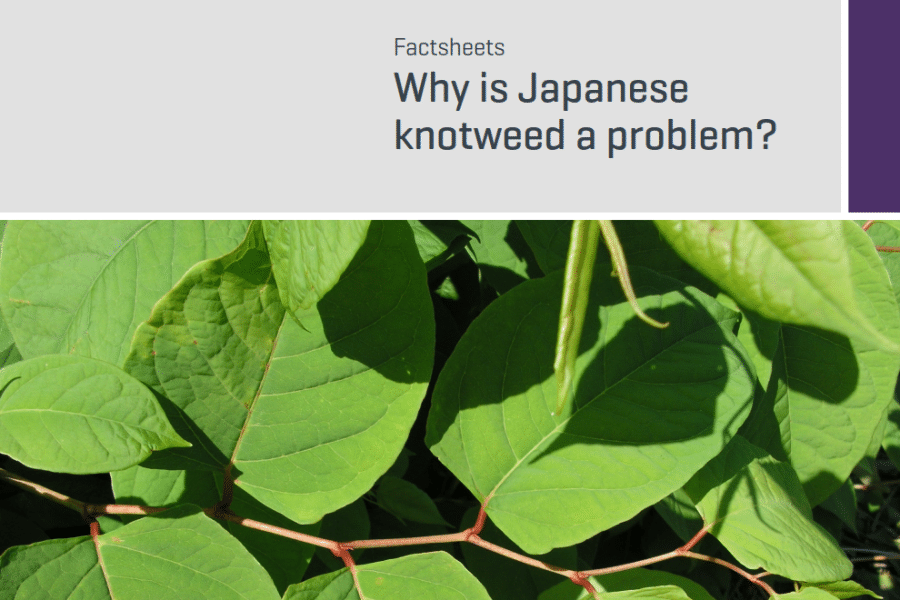 RICS Consumer Factsheet Japanese Knotweed